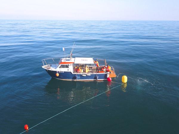 Work from pontoon in seaweed field